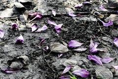 Molte foglie del fiore appassiscono su terra Fotografie Stock Libere da Diritti