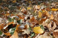 Molte foglie di autunno nel parco, foresta immagine stock libera da diritti