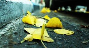 Molte foglie sulla strada zummano Immagini Stock Libere da Diritti