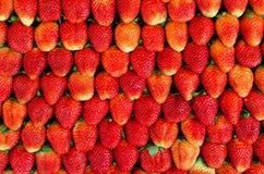 Molte fragole fresche Immagini Stock Libere da Diritti