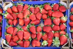 Molte fragole rosse mature dei canestri coltivate facendo uso delle tecniche di Immagini Stock Libere da Diritti