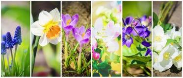 Molte immagini dei fiori collage Fotografie Stock Libere da Diritti