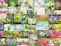 Molte immagini dei fiori collage Fotografia Stock Libera da Diritti