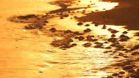 Molte meduse morte sulla costa sabbiosa al tramonto video d archivio