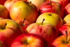 Molte mele rosse e gialle, fondo variopinto immagini stock libere da diritti