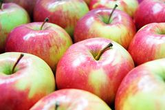 Molte mele rosso verdi fotografia stock libera da diritti