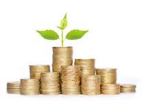 Molte monete in colonna ed in pianta verde isolate su bianco fotografia stock libera da diritti