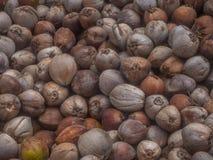 Molte noci di cocco si trovano nella tonalit? delle palme fotografia stock
