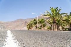 Molte palme accanto alla strada asfaltata che conduce al deserto montagnoso immagini stock libere da diritti