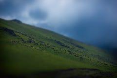 Molte pecore pascono sul pendio di una montagna magnifica nel Caucaso Fotografie Stock