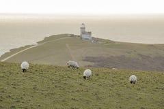 Molte pecore sull'azienda agricola Immagini Stock Libere da Diritti