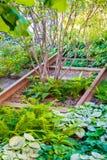 Molte piante che crescono fra i vecchi binari ferroviari a New York Immagini Stock