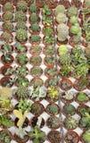 Molte piante del cactus da vendere nella serra Fotografie Stock Libere da Diritti