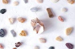 Molte pietre differenti e conchiglia del mare su un fondo bianco immagine stock libera da diritti