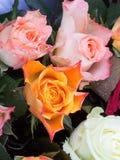 Molte rose colorate con le gocce di pioggia Fotografie Stock