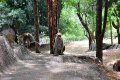 Molte scimmie Fotografie Stock Libere da Diritti