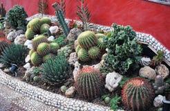 Molte specie di cactus su un letto Fotografia Stock