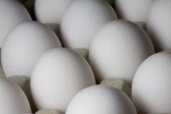 Molte uova Immagine Stock Libera da Diritti