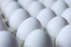 Molte uova bianche Fotografie Stock