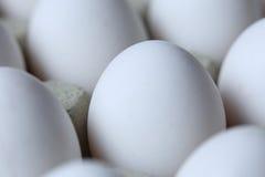 Molte uova bianche Fotografia Stock Libera da Diritti
