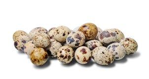 Molte uova di quaglie Immagini Stock