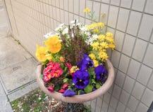 Molte varietà di fiori variopinti in vaso Immagini Stock