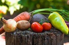 Molte verdure chiudono il fondo dell'agricoltura Fotografia Stock Libera da Diritti