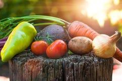 Molte verdure chiudono il fondo dell'agricoltura Immagine Stock