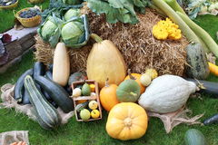 Molte verdure sane differenti in giardino su erba Fotografie Stock Libere da Diritti