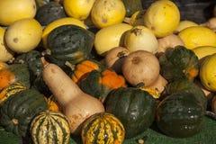 Molte zucche ad un mercato fresco dell'aria aperta Immagini Stock