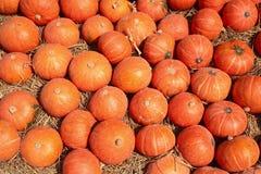 Molte zucche all'azienda agricola di JIM Thompson Fotografia Stock