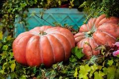 Molte zucche arancio differenti sulla terra nel giorno di autunno si accendono Immagine Stock