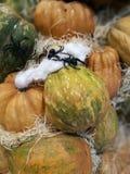 Molte zucche su un mercato degli agricoltori fotografia stock libera da diritti
