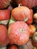 Molte zucche su un mercato degli agricoltori immagine stock