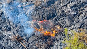Molten lava flowing out onto grey lava field destroying trees Big Island Hawaii. Wide image royalty free stock image