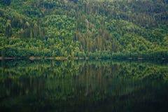 Molti alberi che riflettono in acqua Fotografia Stock