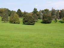 Molti alberi da prato inglese verde Fotografie Stock