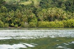 Molti alberi di noce di cocco lungo la spiaggia. Immagine Stock Libera da Diritti