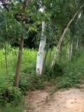 Molti alberi e pianta Fotografia Stock