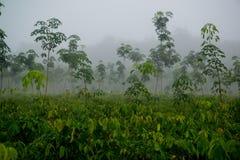 Molti alberi stanno sviluppando Immagini Stock