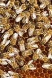 Molti ape di funzionamento Fotografia Stock