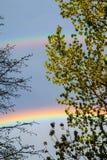 Molti arcobaleni variopinti dietro gli alberi della molla fotografia stock libera da diritti