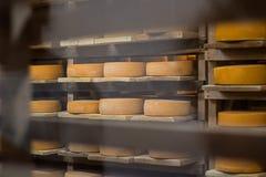 Molti arrotondano i grandi dischi piani di formaggio per invecchiare sullo scaffale di legno Colpo oblungo orizzontale Macchia su fotografia stock
