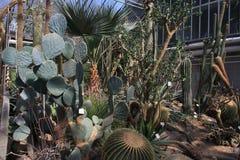 Molti cactus Immagine Stock