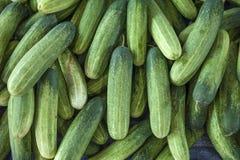 Molti cetrioli organici verdi freschi Immagine Stock