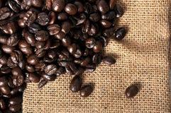 Molti chicchi di caffè Immagini Stock