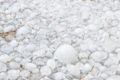 Molti chicchi di grandine freddi di congelamento hanno andato dallo storr, Fotografia Stock