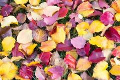 Molti colori della caduta Fotografie Stock Libere da Diritti