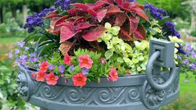 Molti colori differenti in grandi vasi all'aperto Movimento della macchina fotografica del vaso da fiori stock footage