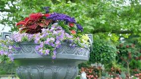 Molti colori differenti in grandi vasi all'aperto Movimento della macchina fotografica del vaso da fiori video d archivio